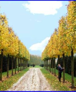 Trees & Hedging