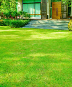 Lawn Care / Seed