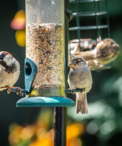 Bird Food & Animal Products