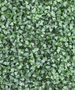 Buxus Wall Cover