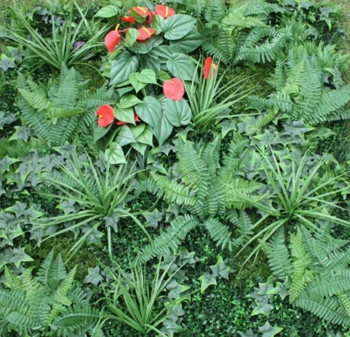 Shutter Grass With Anthurium