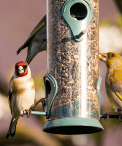 Bird Food & Animal Products